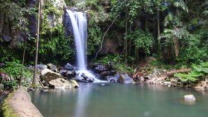 Curtis Falls Waterfall on Tamborine Mountain